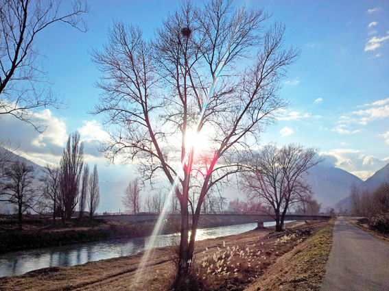 Message de l'arbre: enseignement sur le moment présent